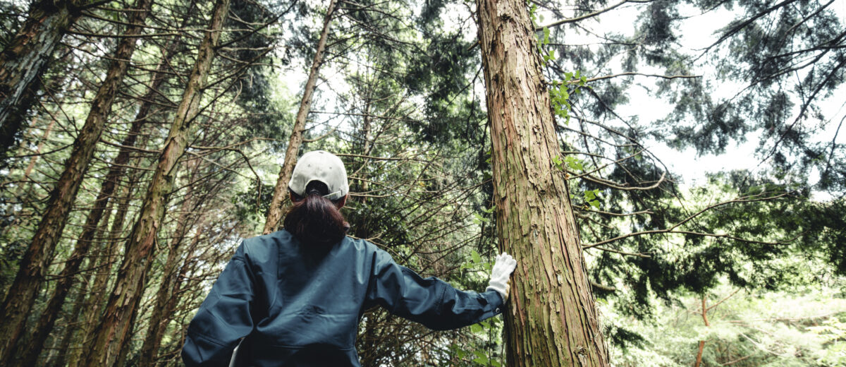RFI: FOR/Maine Forest Economy Educational Connections & Curriculum Design